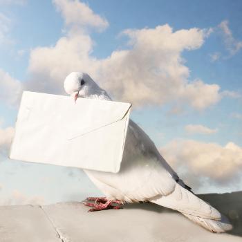 platforma rekrutacyjna a gołąb pocztowy